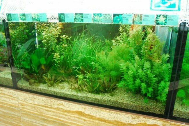 Viele Pflanzen im Aquarium
