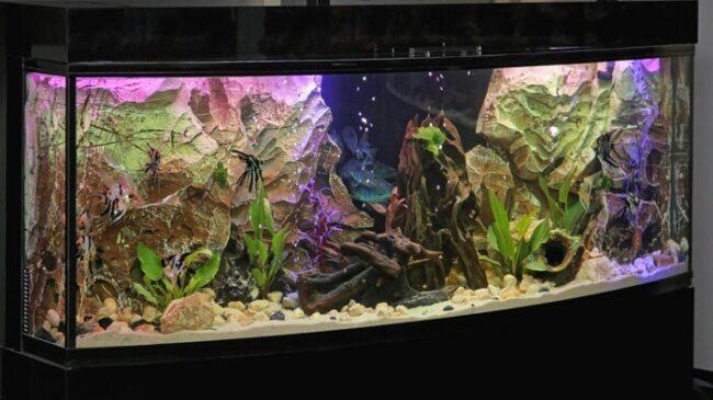 Modernes Aquarium
