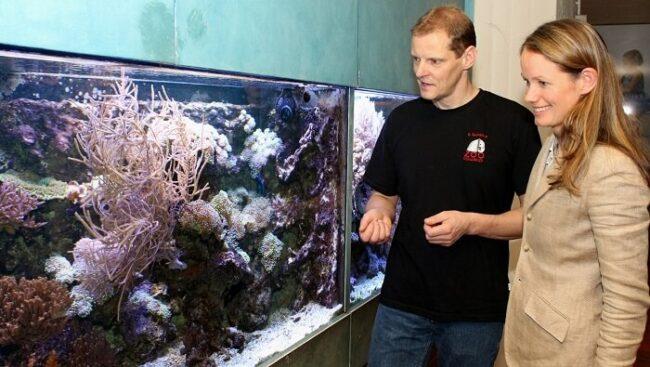 Beratung bei der Auswahl eines Aquariums