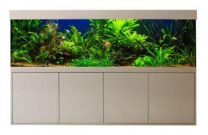 Aquarien von Friedeberg