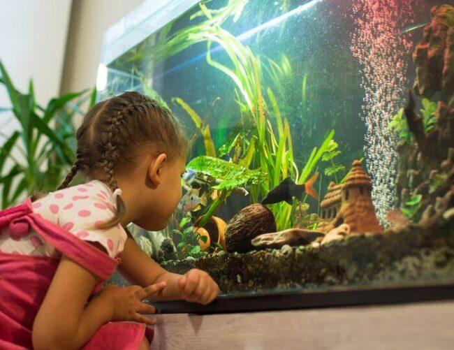 Ein Kind vor einem Aquarium