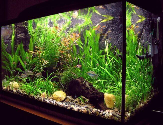 Wasserlandschaft im Aquarium