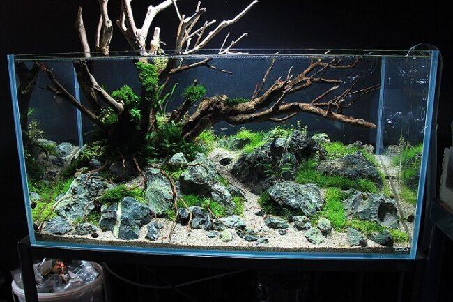 Ideen zur Dekoration eines Aquariums