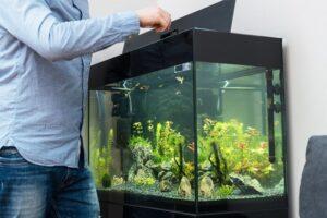 Wie oft und wie füttere ich die Fische richtig?